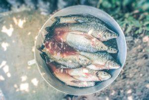 Pescado Azul Omega 3